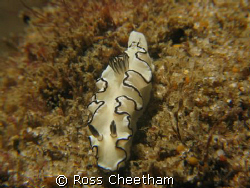 nudi by Ross Cheetham